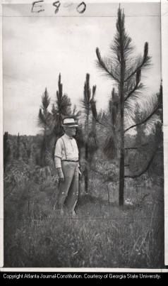Newnan, Georgia's Water and Light Commission chairman H.H. North inspecting pine trees planted on city-owned land as part of a reforestation project to protect water sheds, 1939.