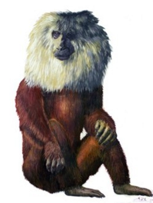 Reconstruction of Paradolichopithecus. Drawing by A. Vlachos